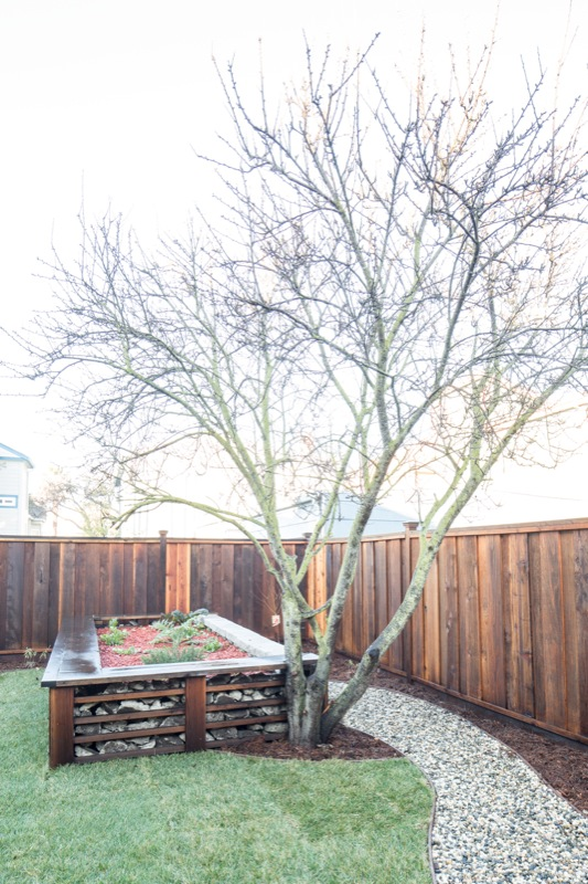 5855 Vallejo Backyard Tree picture