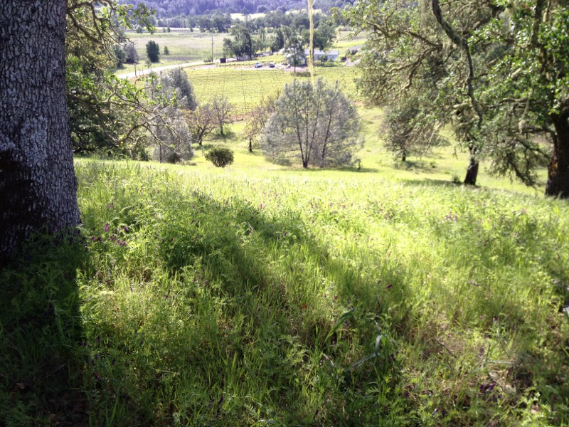 6125 Pope Valley Rd - land picture